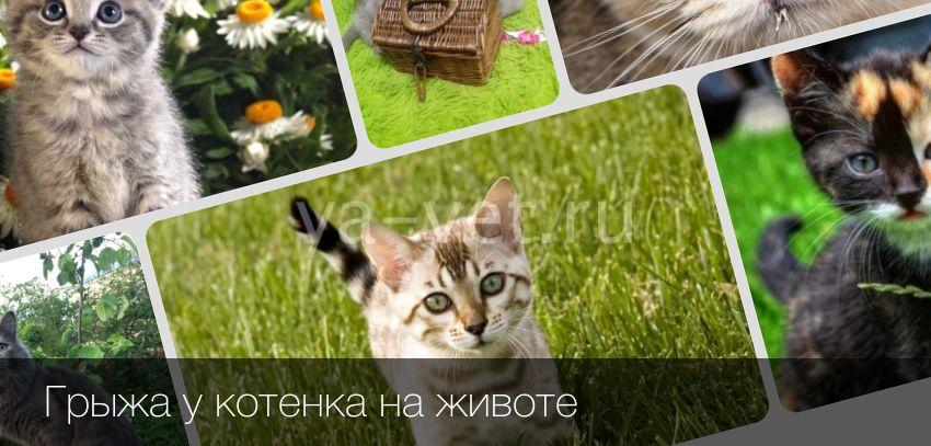 Грыжа у кота на животе фото