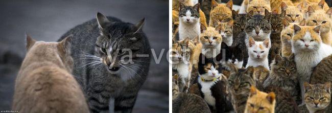 как часто делают прививку от бешенства кошкам