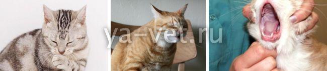 кошка кашляет, как будто подавилась