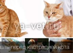 Кастрация котов в люберцах цена