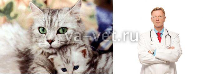 острый нефрит у кота