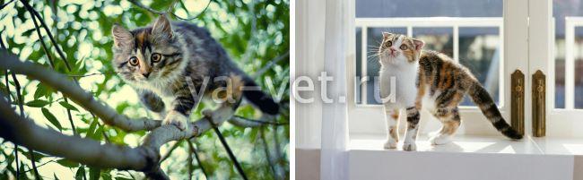перелом лапы у кошки