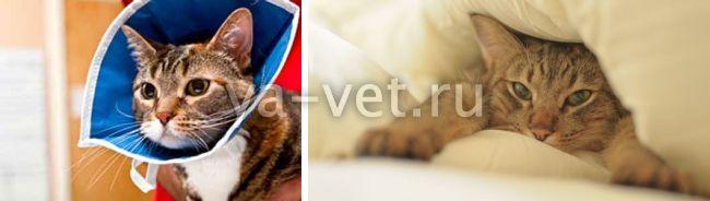 перелом таза у кошки лечение без операции