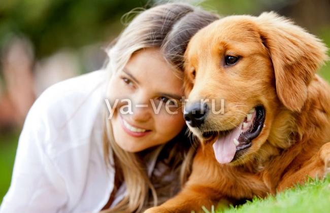 Инструкция по применению вакцины Нобивак для собак