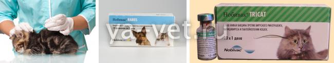 прививка кошке комплексная цена