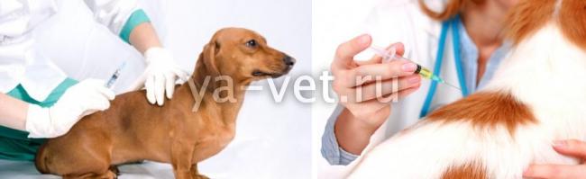 прививка для собак нобивак цена