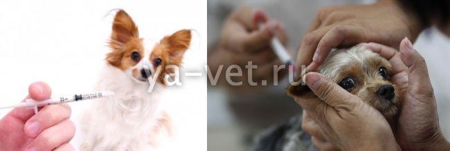 прививка от бешенства щенку