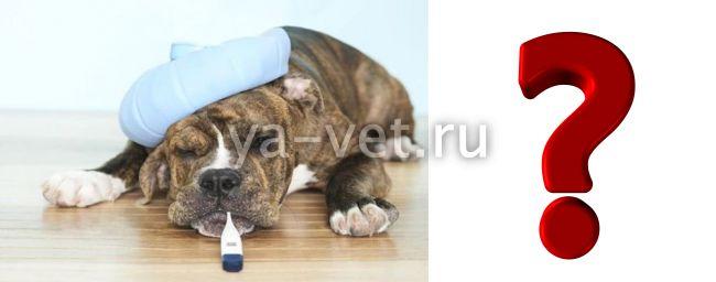 прививка от чумки собаке