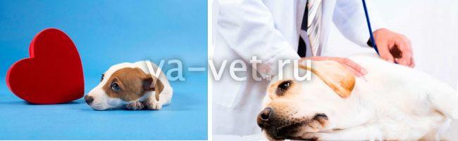 признаки болезни сердца у собак