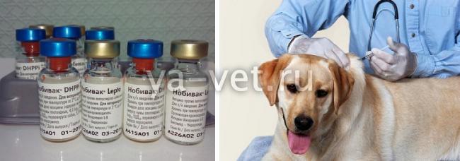 схема прививок нобивак для щенков