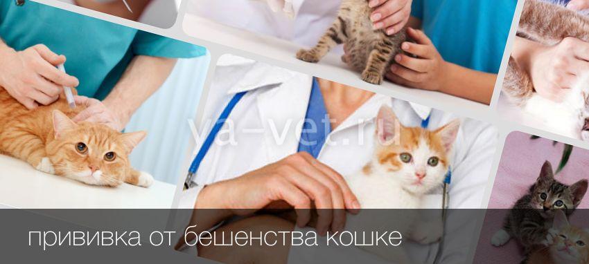 Как часто делать прививки коту