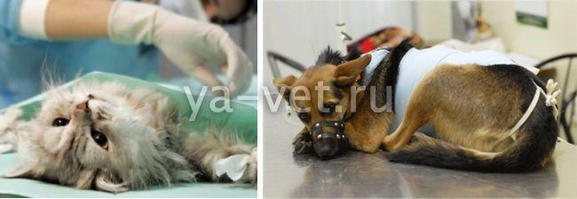 стерилизация животных
