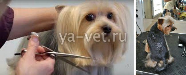 стрижка собак йоркширский терьер