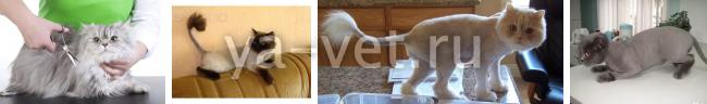 стрижка собак и кошек на дому
