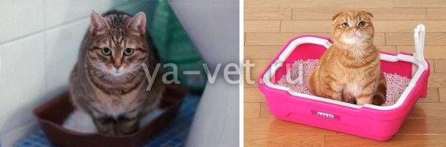 у кошки понос со слизью, - что делать?