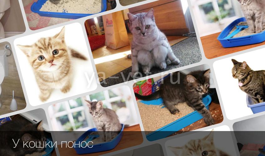 Понос у кошки причины и лечение в домашних условиях 746