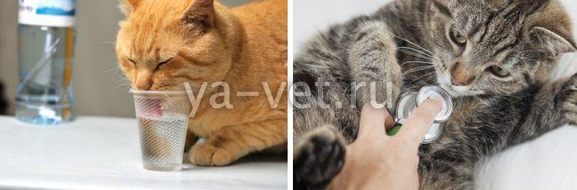 у кошки понос со слизью что делать