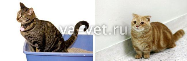 у кошки понос со слизью
