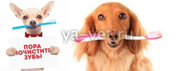 ультразвуковая чистка зубов собаке без наркоза