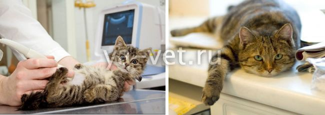 ветеринарная диагностика в Москве и МО