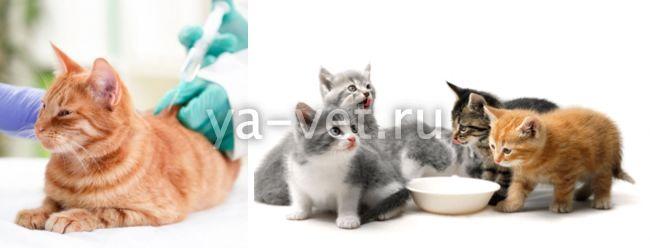 вирусная инфекция у кота симптомы лечение