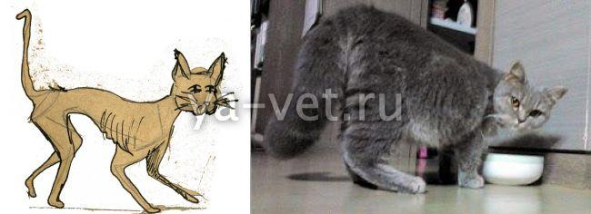 вирусный перитонит у кошек излечим