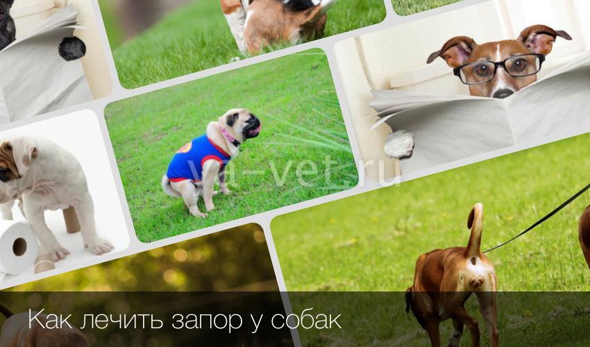 Запоры у собаки лечение в домашних условиях