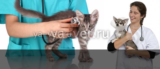ветеринария кошек