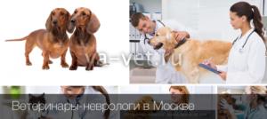 Вызов ветеринара на дом в Москве
