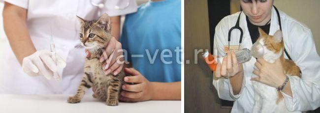 астма у кошек симптомы