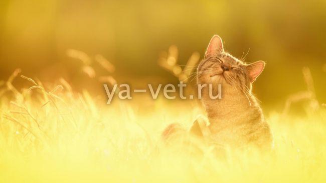 бельмо у кошек лечение
