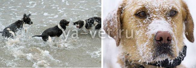 бронхит у собак симптомы и лечение