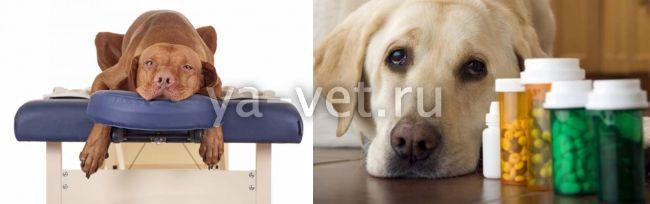 чем лечить артроз у собак