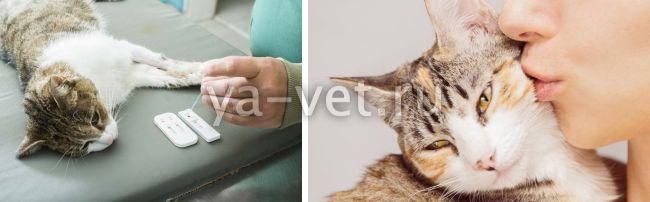 что показывает биохимический анализ крови у кошек