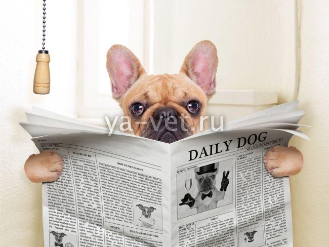 дисбактериоз у собак лечение