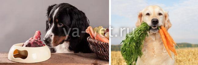 дисбактериоз у собак симптомы