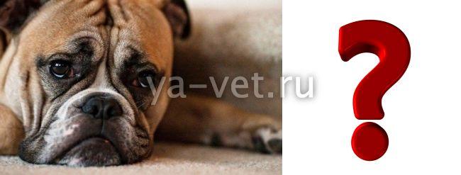 энтероколит у собаки симптомы и лечение