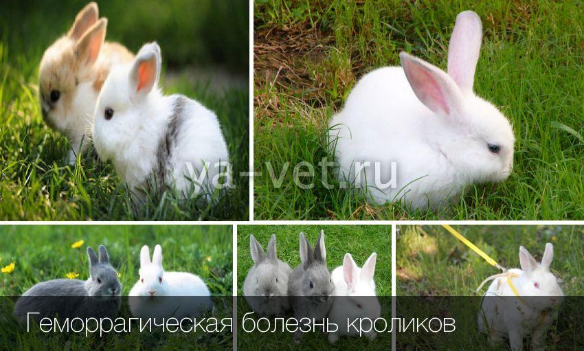 Болезни кроликов: симптомы и их лечение
