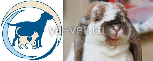 геморрагическая болезнь кроликов симптомы и признаки