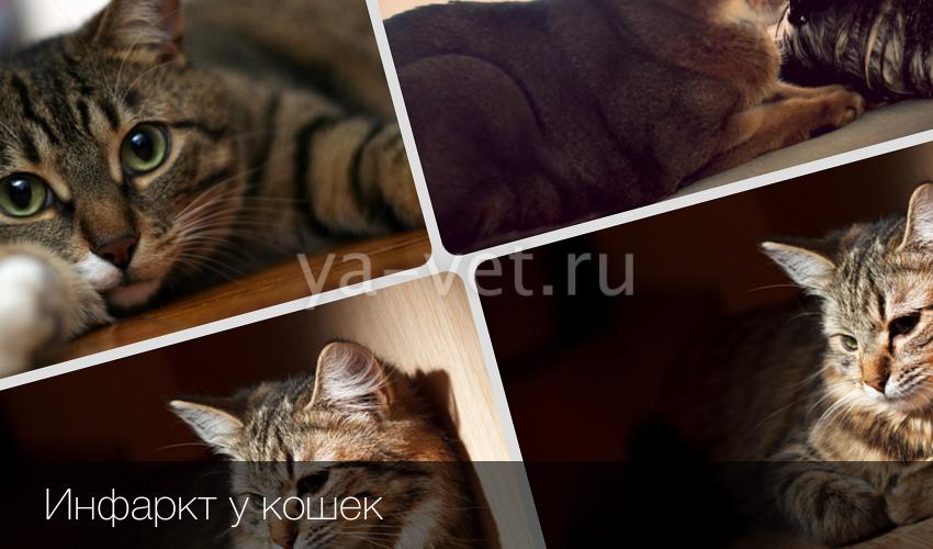 Сердечный приступ у кота что делать 197