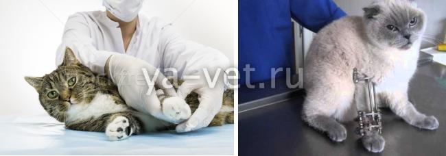 как определить перелом у кошки