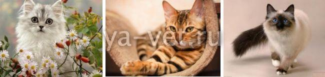 Анализ мочи кота: как собрать мочу у кота на анализ