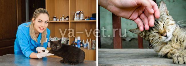 короновирусный гастроэнтерит у кошек