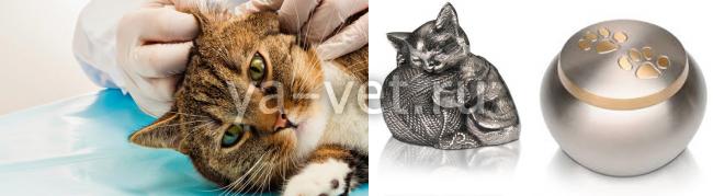 Кремировать кошку