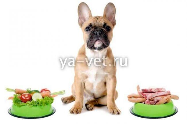 лечение энтероколита у собак