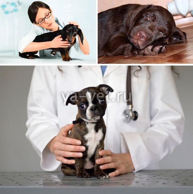 лечение колита у собак