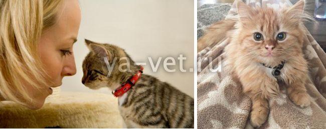 лямблиоз гиардиоз у кошек