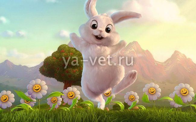 микоплазмоз у кроликов лечение