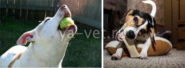 непроходимость кишечника у собаки симптомы и лечение