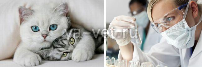 нормальные показатели биохимического анализа крови у кошек